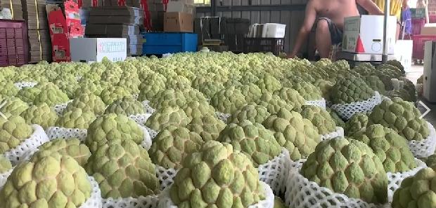 中國今年一口氣禁「鳳梨釋迦蓮霧」3水果進口 台灣每年恐損40億元!