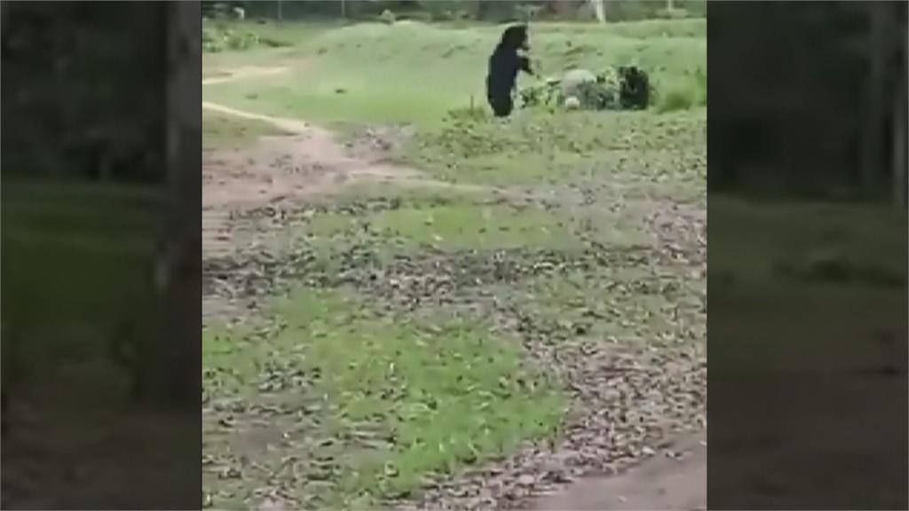 萌毛小孩亂入足球賽 印度黑熊也愛踢球