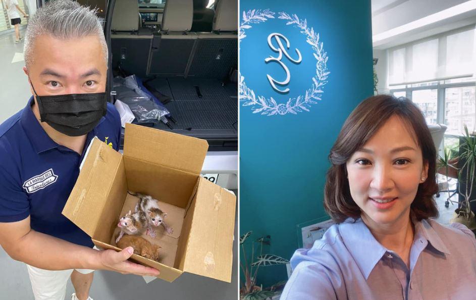 新晉貓奴郁方超幸運撿到寶!飼養罕見貓咪身價高達「2千萬日幣」