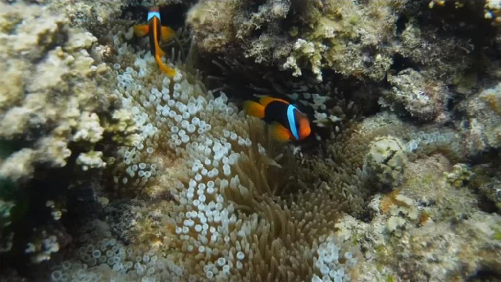 大堡礁珊瑚白化 逃過降級命運 明年再審
